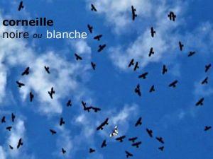 corneilleBlancheNoires05©AT