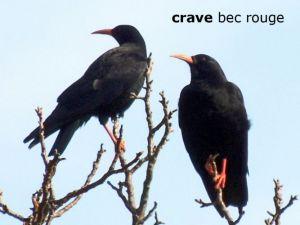 craveBecRouge002deux©JC