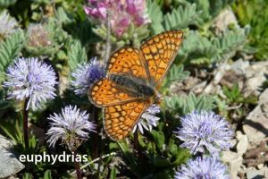 papillonEuphydrias394©JPB