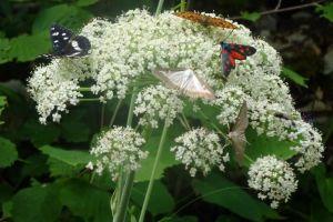 papillonsVariés2852©MB
